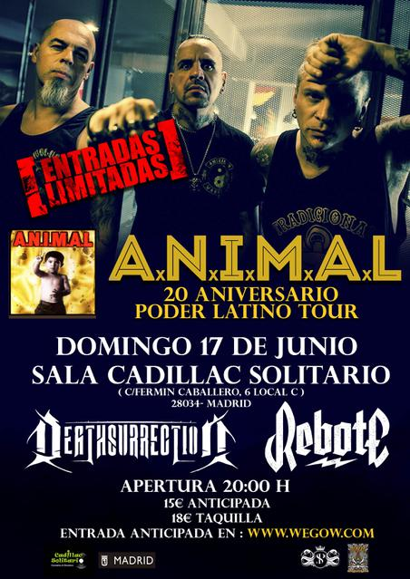 ANIMAL MADRID WEGOW